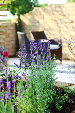 Beautiful lavender with outdoor furniture and sun deck in background