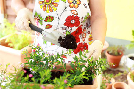 replanting: Elderly woman replanting flowers for better growth Stock Photo