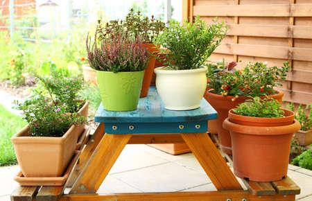 小さな庭、パティオまたはテラスの屋外の植木鉢 写真素材