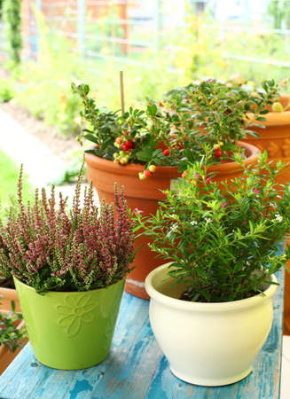 flower pots: Outdoor flower pots for small garden, patio or terrace