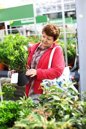 Senior woman buying plants for the garden Stock Photo - 10686061