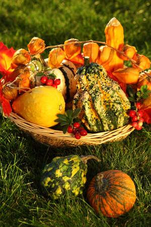 Still life of pumpkins for Thanksgiving photo