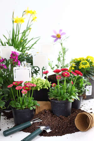 seed pots: Plenty of decorative flowers and vegetable ready for planting Stock Photo