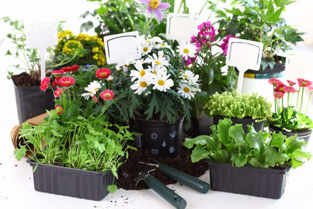 Plenty of decorative flowers and vegetable ready for planting photo