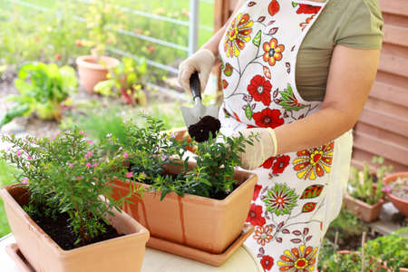 Elderly woman replanting flowers for better growth photo