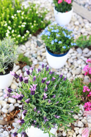 Small rock garden constructed with rocks and alpine plants photo