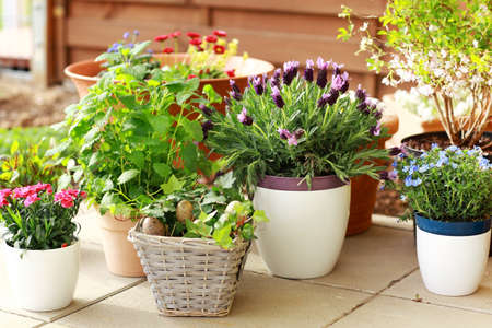Outdoor flower pots for small garden, patio or terrace photo