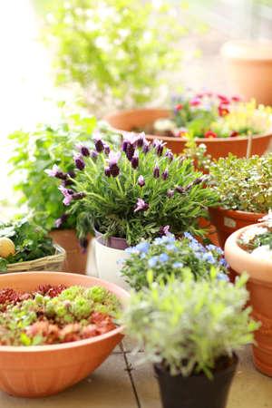 balcony: Outdoor flower pots for small garden, patio or terrace
