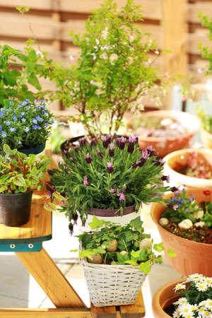 Outdoor flower pots for small garden, patio or terrace photo