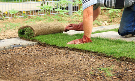 sod: Man laying sod for new garden lawn Stock Photo