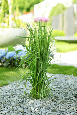 ornamental horticulture: Ornamental grass in rock garden