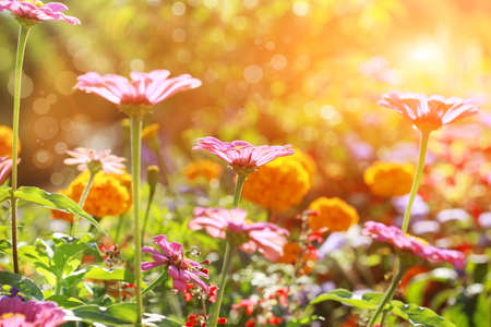 Abstract flowerbed in sunny day, shallow DOF photo