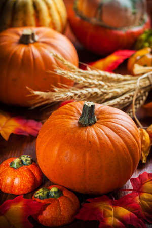 Traditional pumpkins for Thanksgiving and  Halloween in autumn colors
