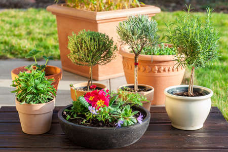 Outdoor flower pots  with herbs and flowers for small garden