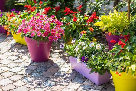 Outdoor bloempotten voor de kleine tuin, terras of terras Stockfoto