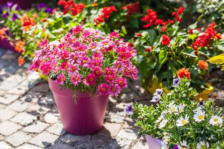 Outdoor flower pots for small garden, patio or terrace Stock Photo - 42526291