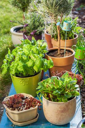 Outdoor flower pots for small garden, patio or terrace Stock Photo