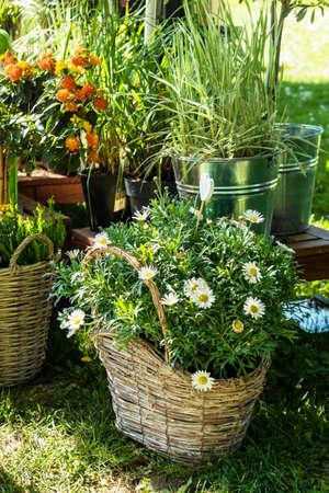 Macetas De Flores Al Aire Libre Para Un Pequeño Jardín, Patio O ...