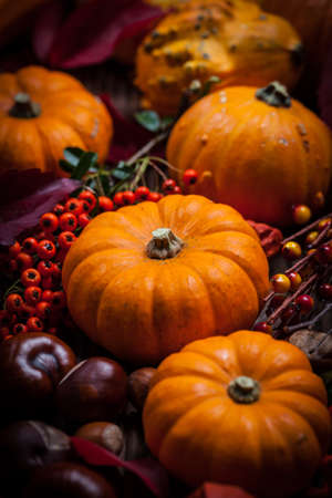 Traditional pumpkins for Thanksgiving in warm colors Stock Photo
