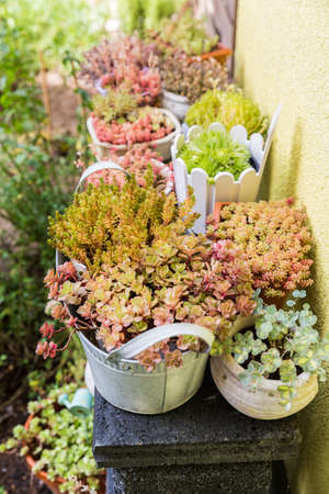 Variation of flower pots with succulents in garden