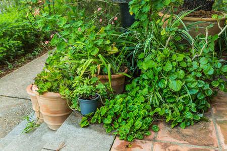 Variation de plantes et de pots de fleurs dans le jardin méditerranéen dans les escaliers