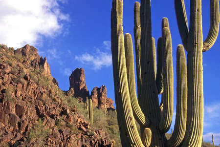 Superstition Mountains Cactus Stock Photo