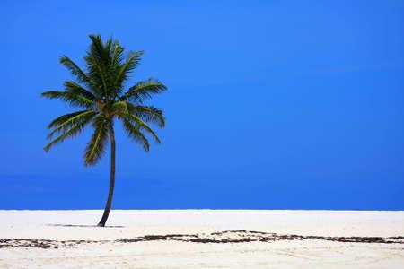 An isolated coconut palm on a beach in the Bahamas.