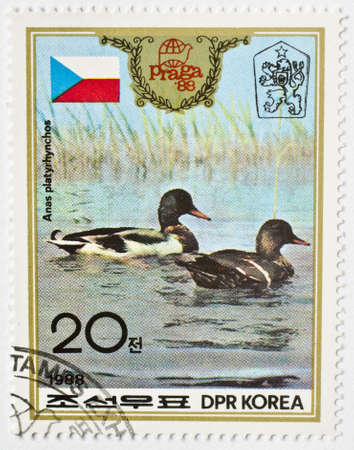 NORTH KOREA - CIRCA 1988  a stamp from North Korea shows image of mallards  Anas platyrhynchos , circa 1988  Stock Photo