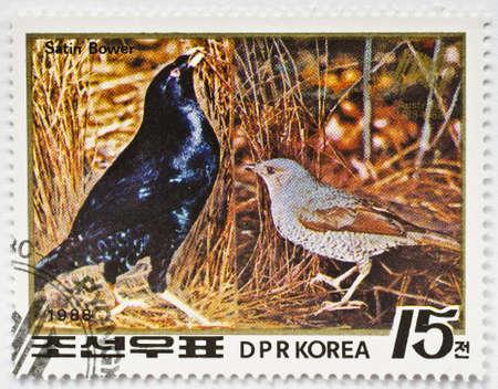 NORTH KOREA - CIRCA 1988  a stamp from North Korea shows image of a satin bower  Ptilonorhynchus violaceus , circa 1988