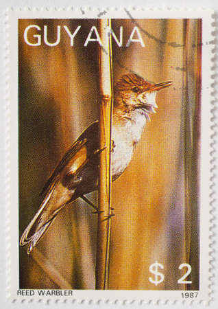 GUYANA - CIRCA 1987  a stamp from Guyana shows image of a reed warbler  Acrocephalus scirpaceus , circa 1987