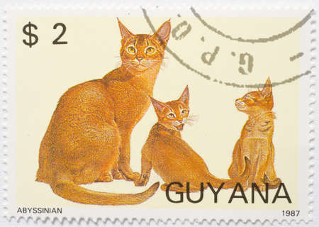 GUYANA - CIRCA 1987  a stamp from Guyana shows image of three Abyssinian cats, circa 1987 Stock Photo - 17564255
