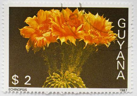 GUYANA - CIRCA 1987  A  2 stamp from Guyana shows image of an Echinopsis cactus, circa 1987