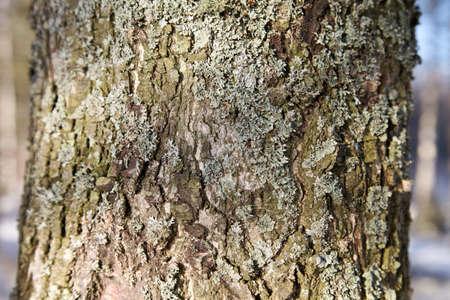 적합: Close_up of bark of a pine tree suitable as background