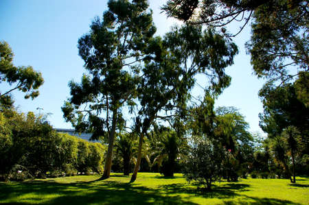 grassy plot: Grassy plot and eucaliptus in summer