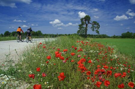 Training of bicyclists on beautiful road with a blossoming poppy. The picturesque dark blue sky with clouds. photo