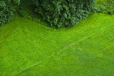 The top view on a green lawn
