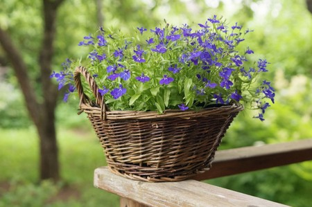 Basket with flowers in a garden photo