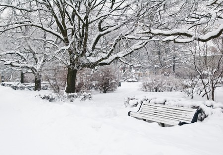 Covered by a snow a bench in park photo