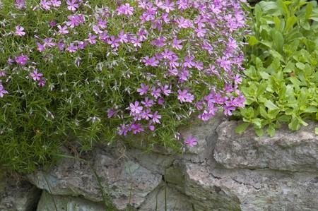 Well-groomed spring garden Stock Photo - 8254450