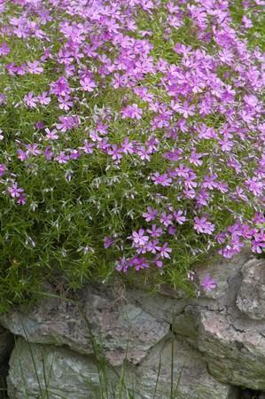 Well-groomed spring garden Stock Photo - 8254447