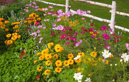 Flowers in a garden Stock Photo - 8254448