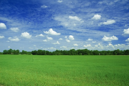 green field Stock Photo - 8632574