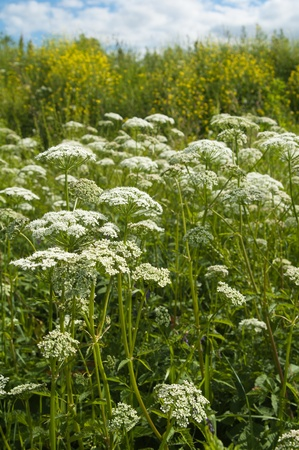 Meadow flowers, close up Stock Photo - 12631990