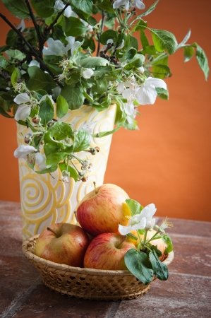 Beautiful ripe apples and branches of a blossoming apple-tree in a vase photo