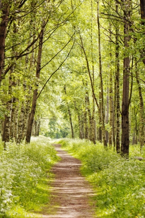 Path in a sunny summer forest