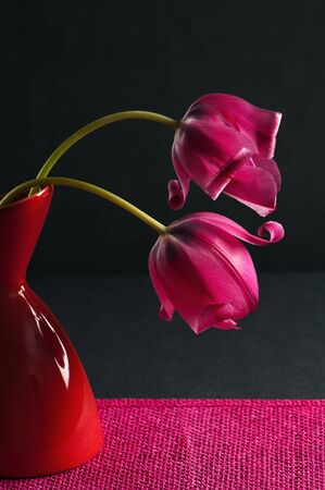 pink tulips in a vase on a black background Stock Photo - 14021039
