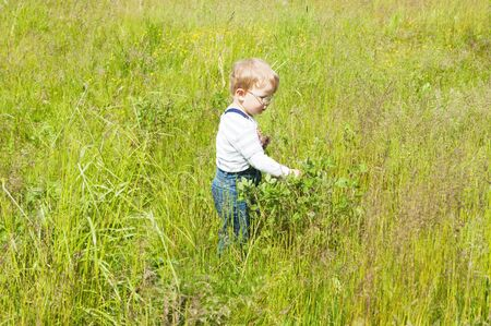 The little boy catches grasshoppers in a grass photo