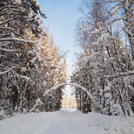 Snow covered path during winter wood photo