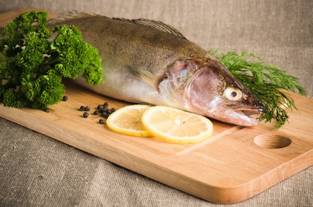 on perch: Pike perch on a wooden kitchen board, it is isolated on white Stock Photo