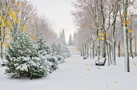 estonia: Alley in the Park later in the autumn  Snow storm Stock Photo